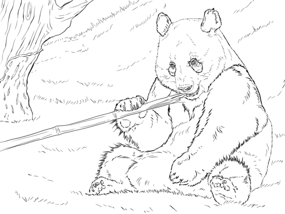 Giant Panda is Eating Bamboo Coloring page Panda