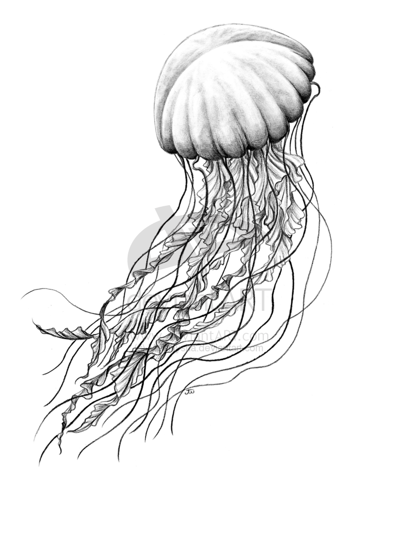 Seanettle By Missnysha Deviantart Com On Deviantart Jellyfish Jellyfish Art Jellyfish Drawing Biology Drawing