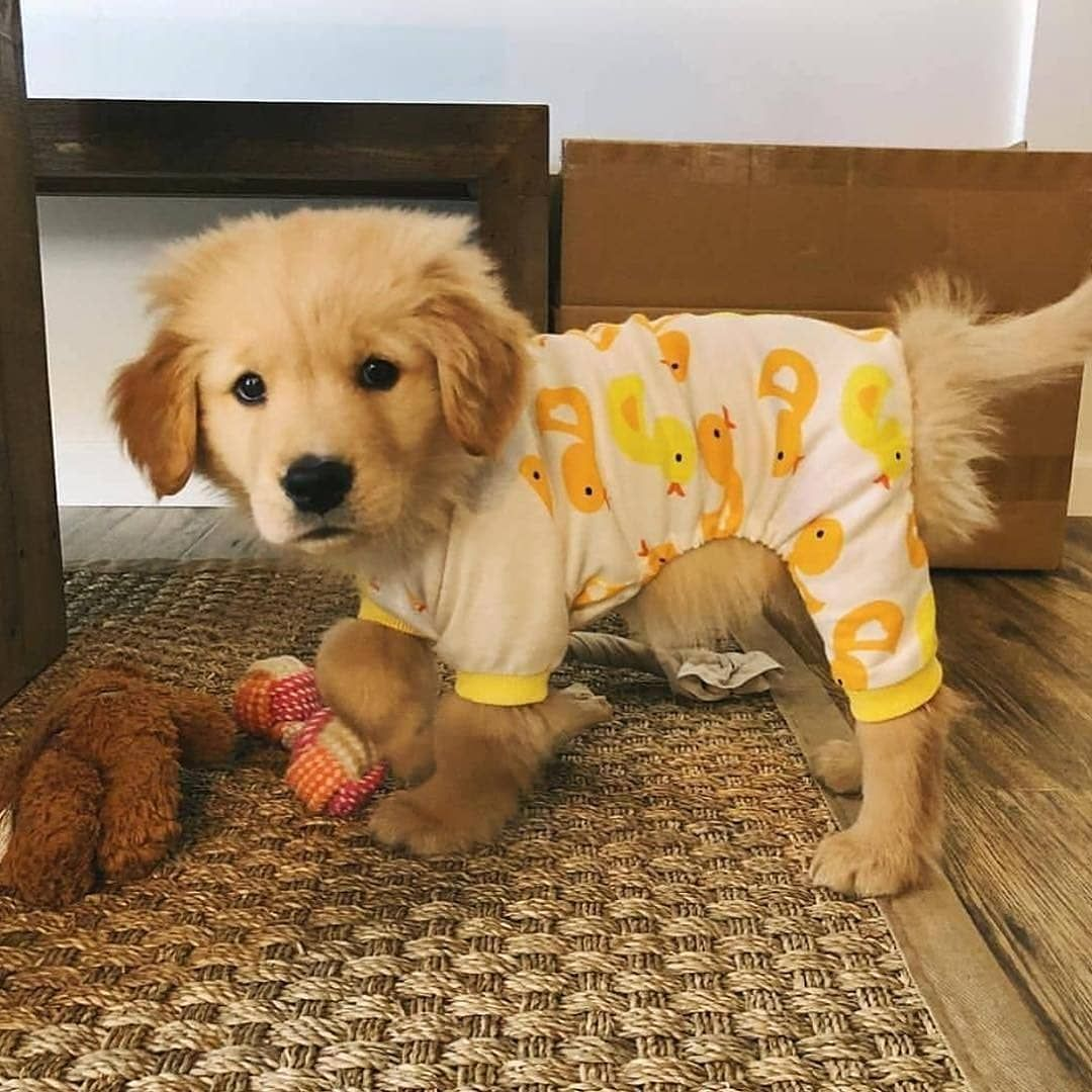 Do You Like My Pajamas Sawyerthegoodboy Follow