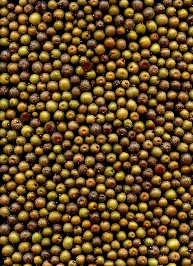 52590 pyrus calleryana fruit art black peppercorn