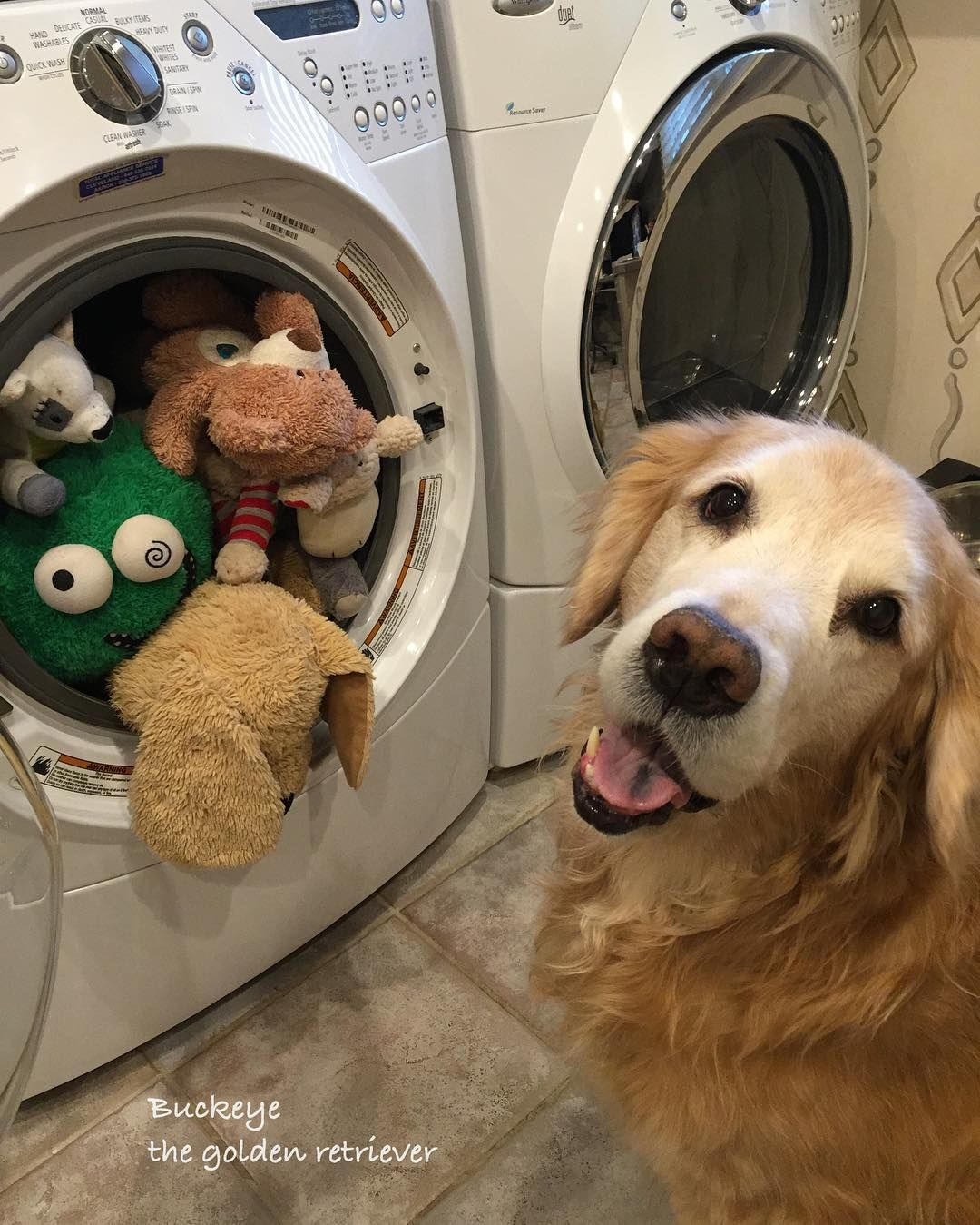 Time To Wash All The Favorite Toys Buckeye Funny Animal