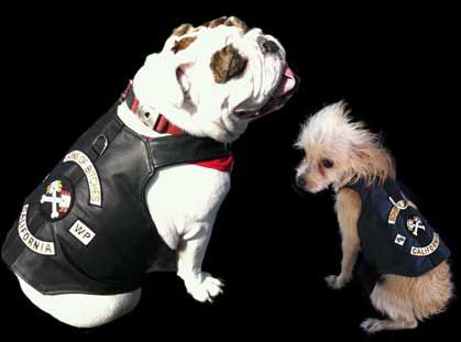 Real leather biker jacket for you dog. Vest sizes Teacup to XXL. Made in the USA!!!