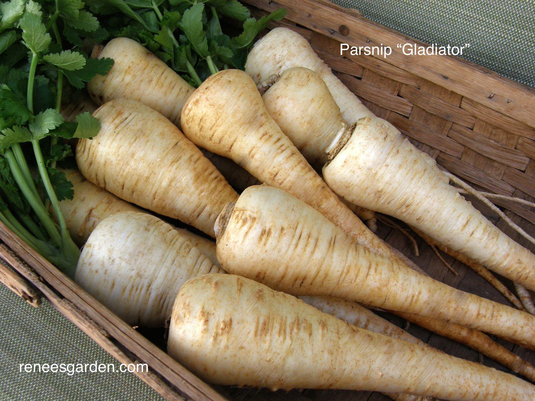 Gladiator | Pinterest | Garden pictures, Vegetable garden and Gardens