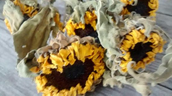 """Dried Sunflower Stems  18""""-22"""" long - Perfect For Rustic Country Weddings on Etsy, $12.00"""