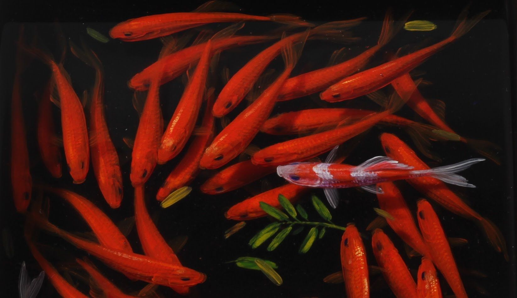 This Is A Painting Of Fish In Layers Of Resin Whoah A R T S Y - Incredible 3d goldfish drawings using resin