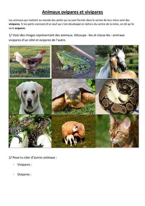 image animaux ovipares