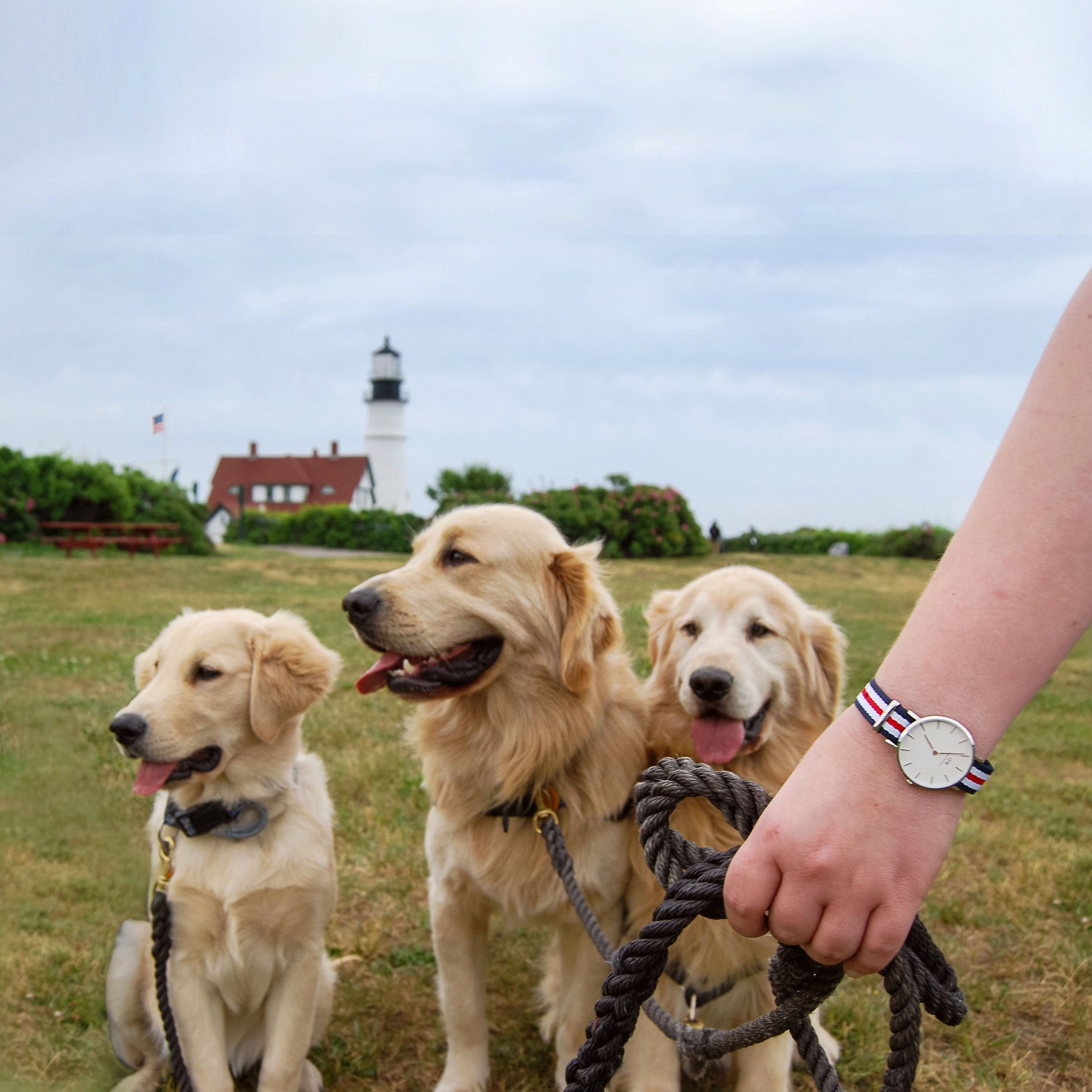 Maine golden retriever father and sons at Portland Head