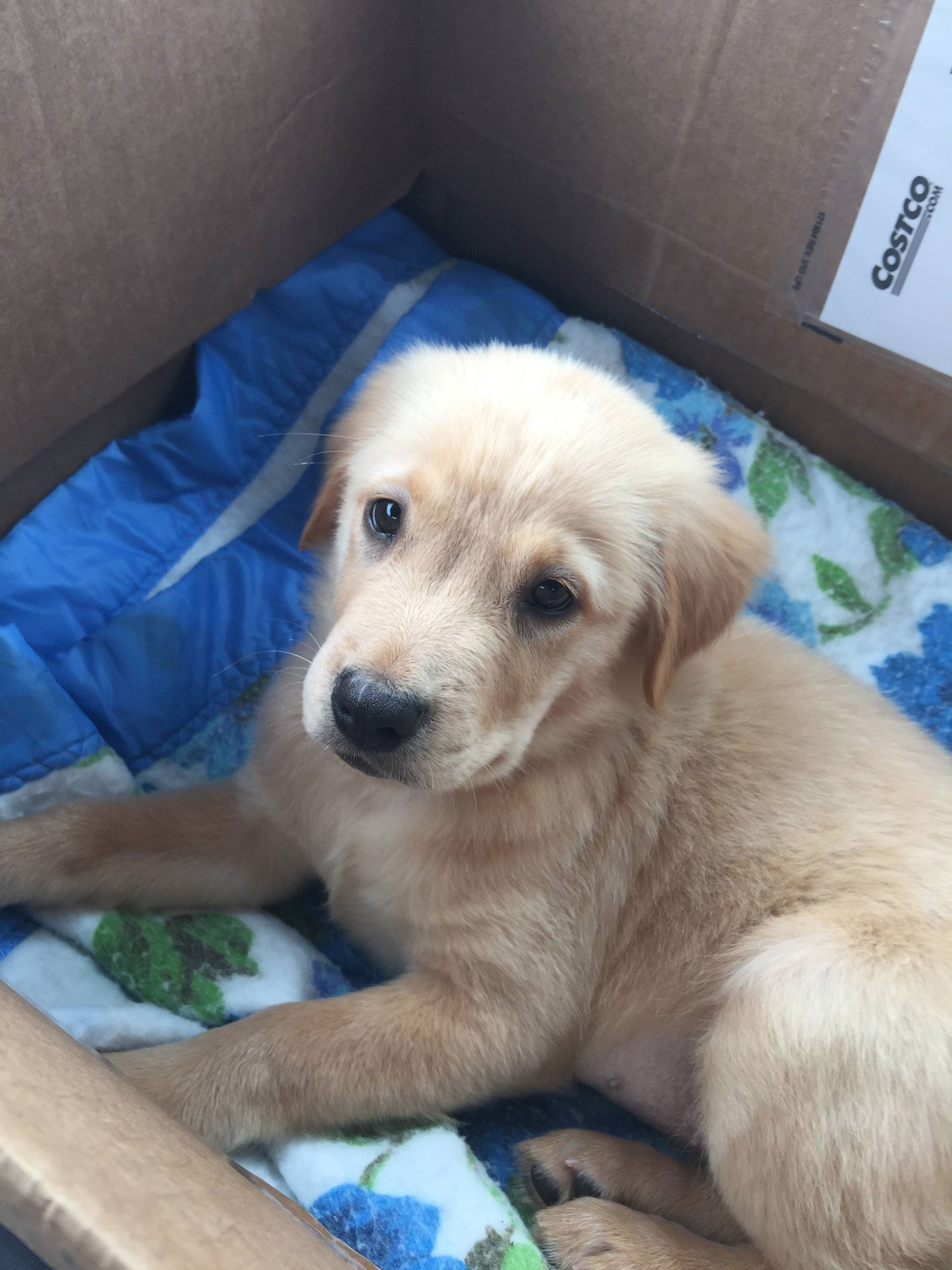 Meet Murphy the cutest puppy ever