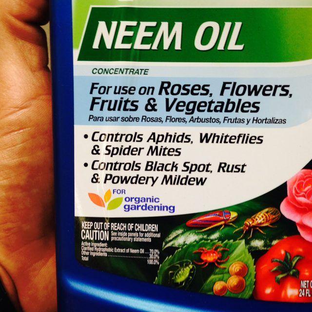 How To Make Neem Oil Pesticide
