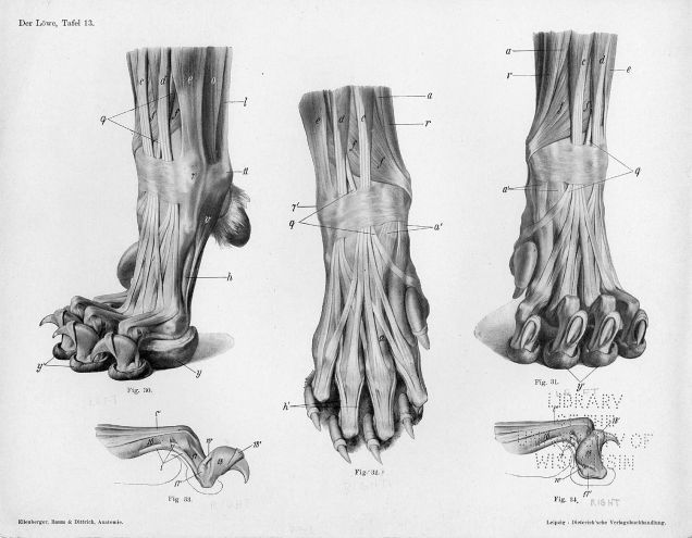 Lose Yourself In The Gorgeous Anatomical Drawings Of Hermann