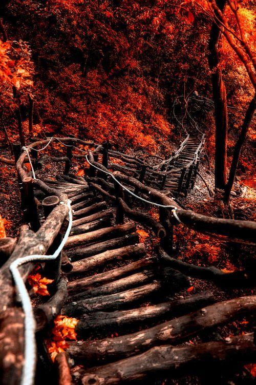 The serpentine path