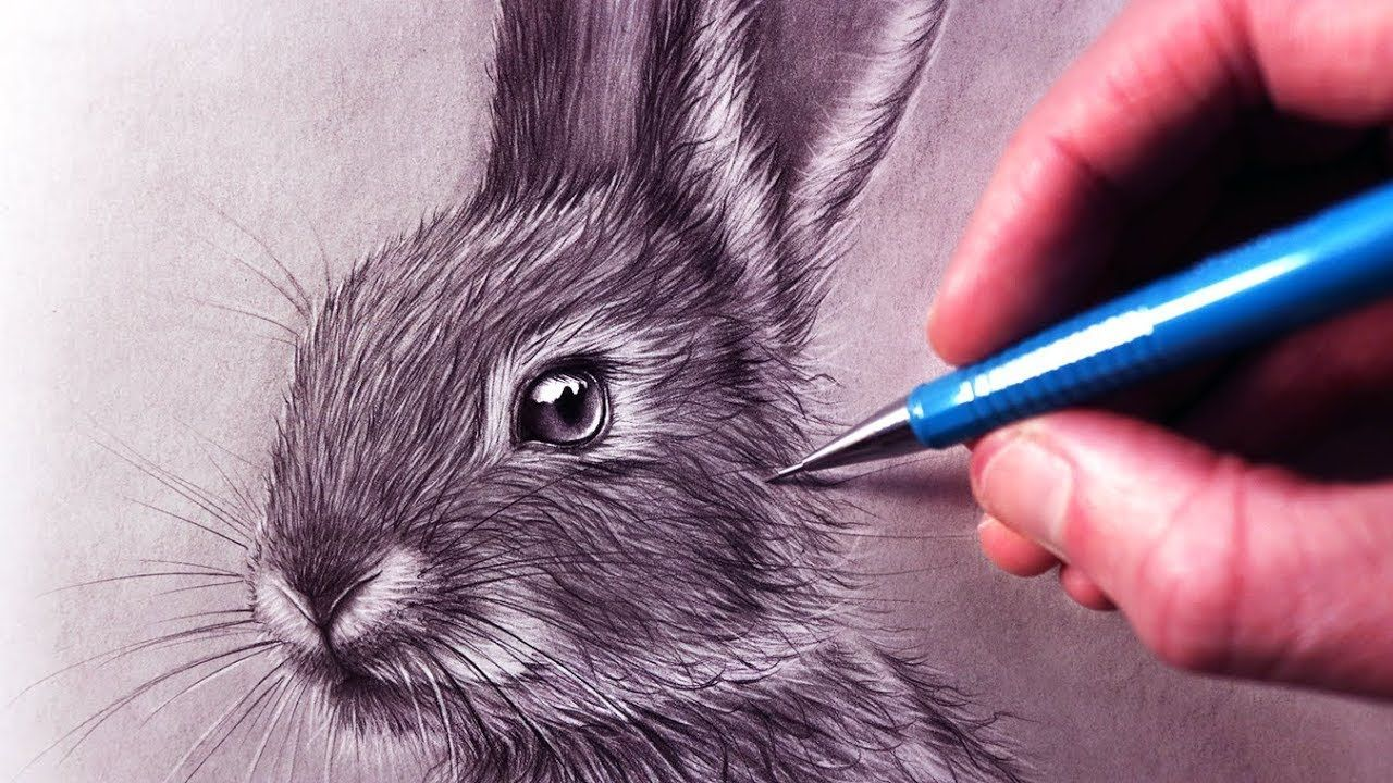 How To Draw A Rabbit Rabbit Drawing How To Draw Fur Drawing For Beginners