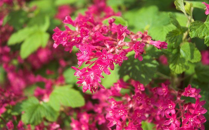 10 Best Fast Growing Shrubs For Instant Garden Impact 400 x 300