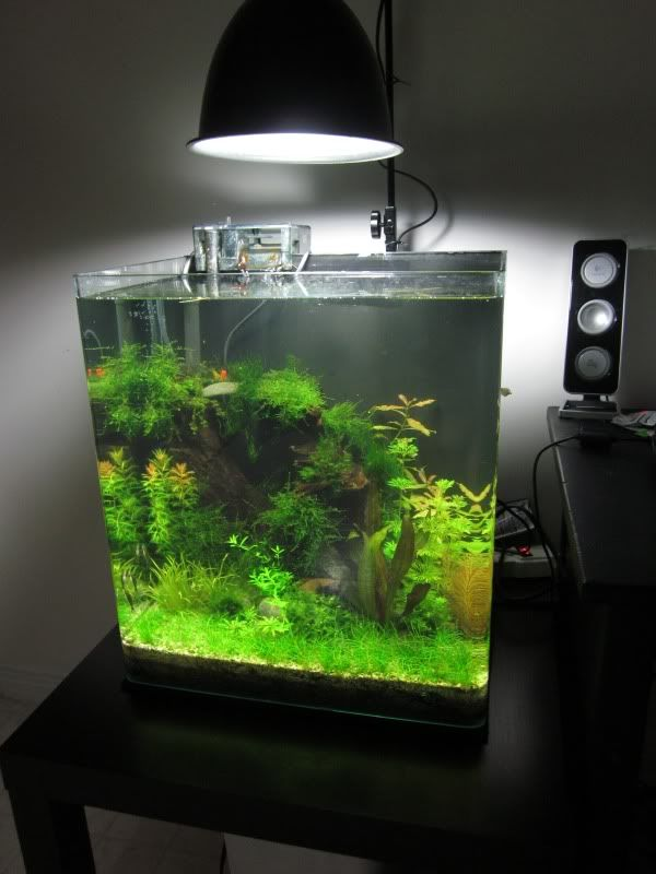 my inexpensive cfl light solution page 12 the planted tank forum