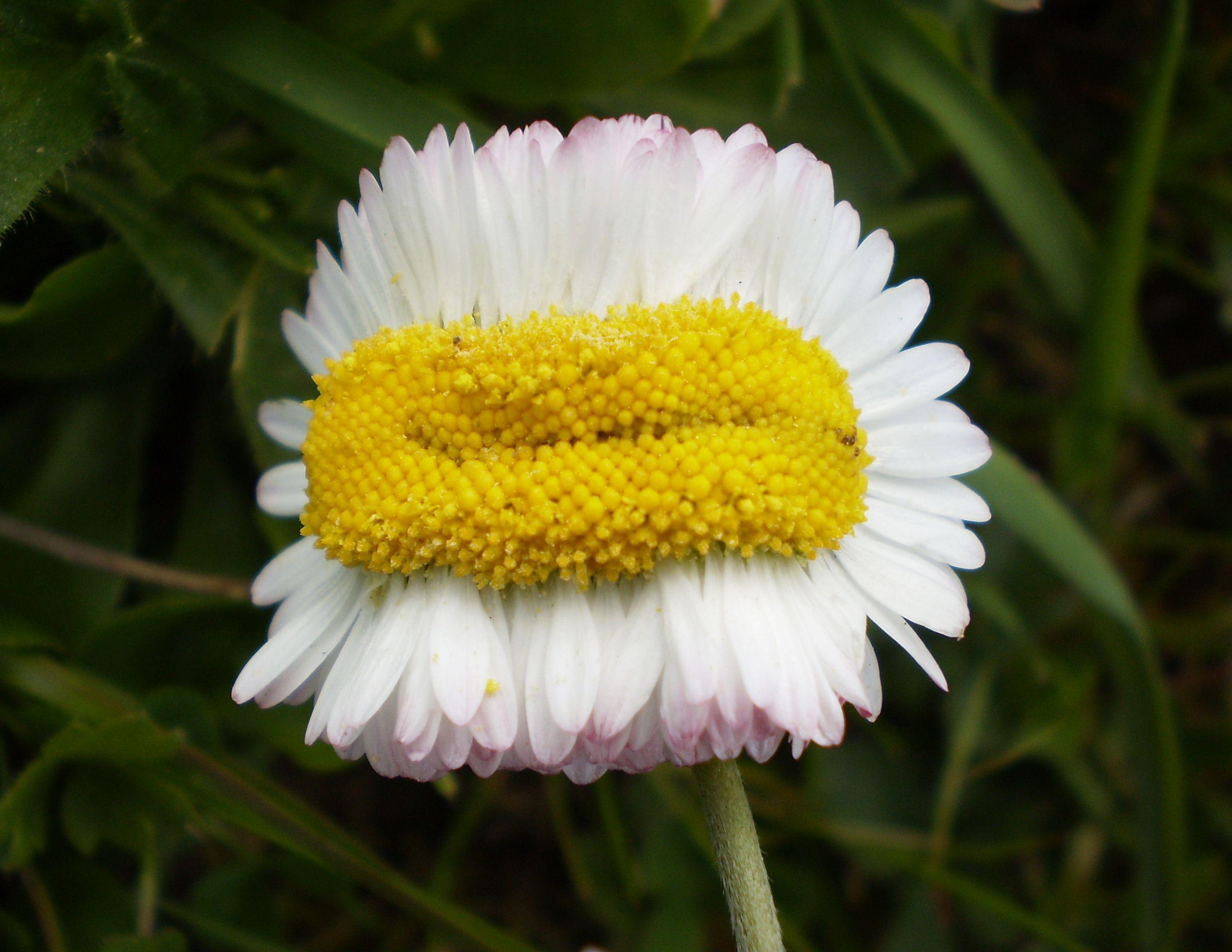 Картинки, смешная картинка цветочек