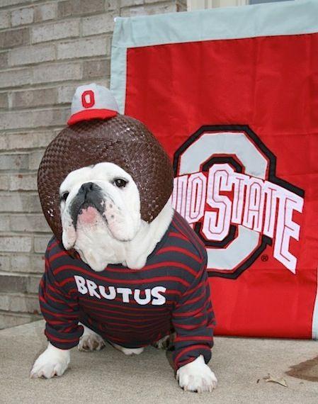 Go Bucks Levi S Puppy Corner Ohio State Pet Halloween