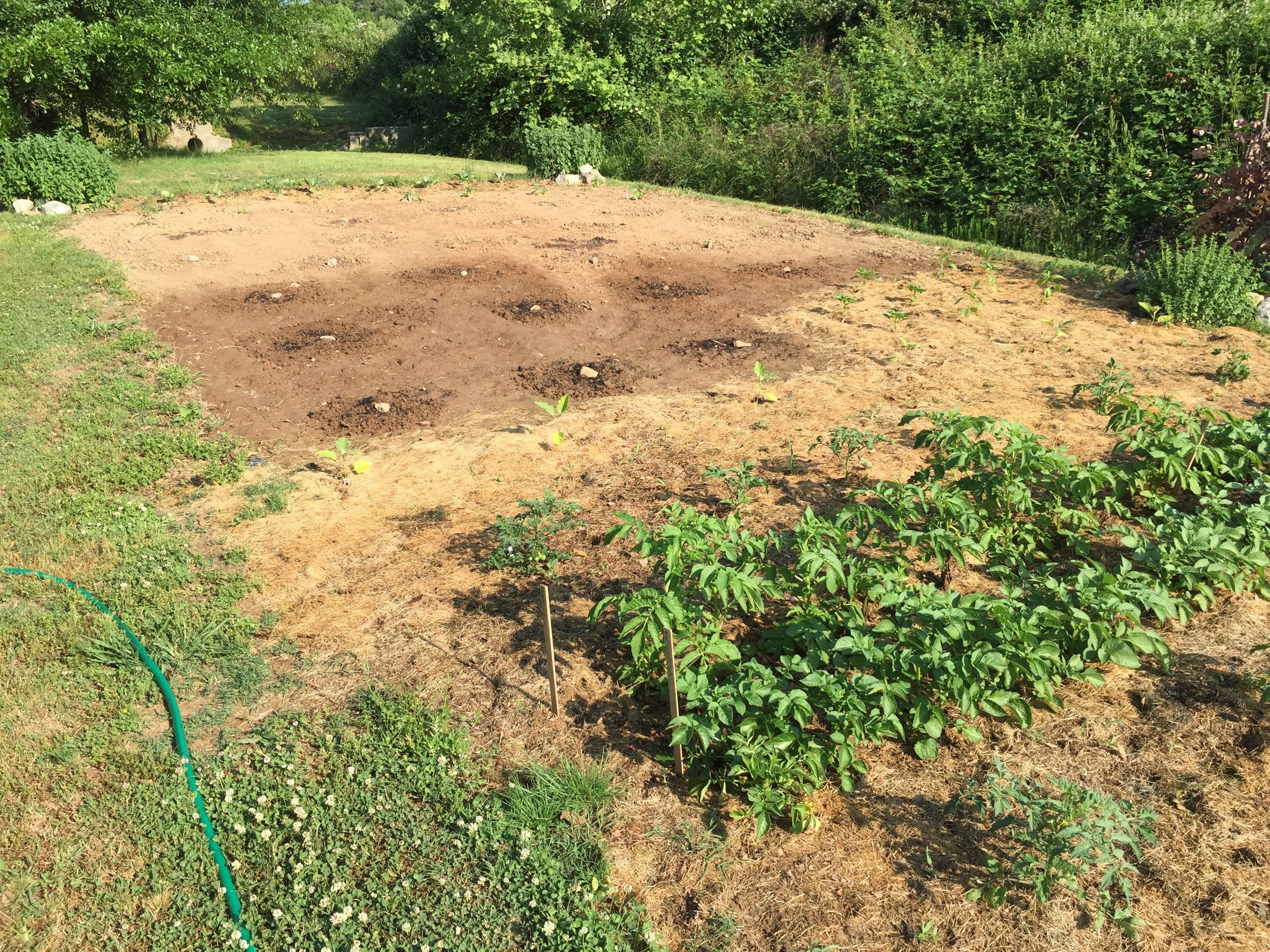 Heavy duty ground cover removed to show rich weedfree soil works