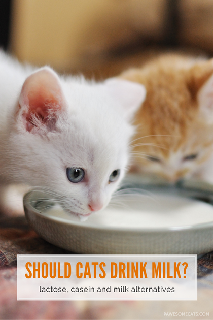 Is it Ok for Cats to Drink Milk Cat nutrition, Milk for