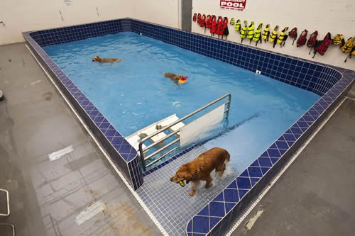 Pin By Taylor Ball On Dog Park Dog Pool Indoor Dog Park Indoor Dog
