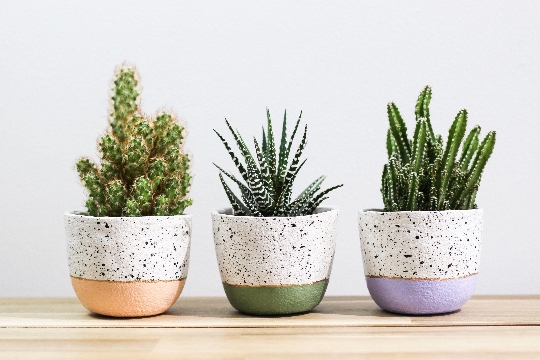 Mini Speckled Plant Pot Indoor Plant Pot Small Succulent Planter