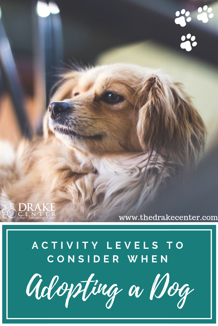 Tips on how to choose the right canine companion to fit