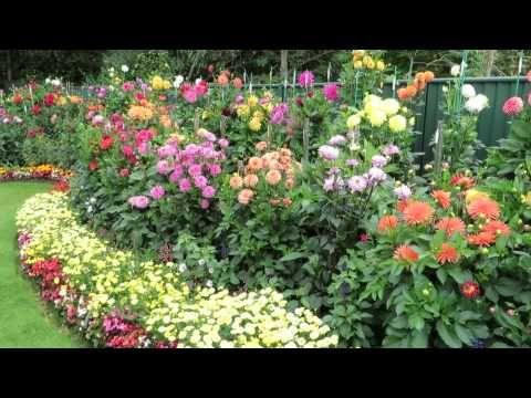 Geoff And Heather S Dahlia Garden 20 August 2014 Youtube Dahlias Garden Dahlia Flower Garden Spring Plants