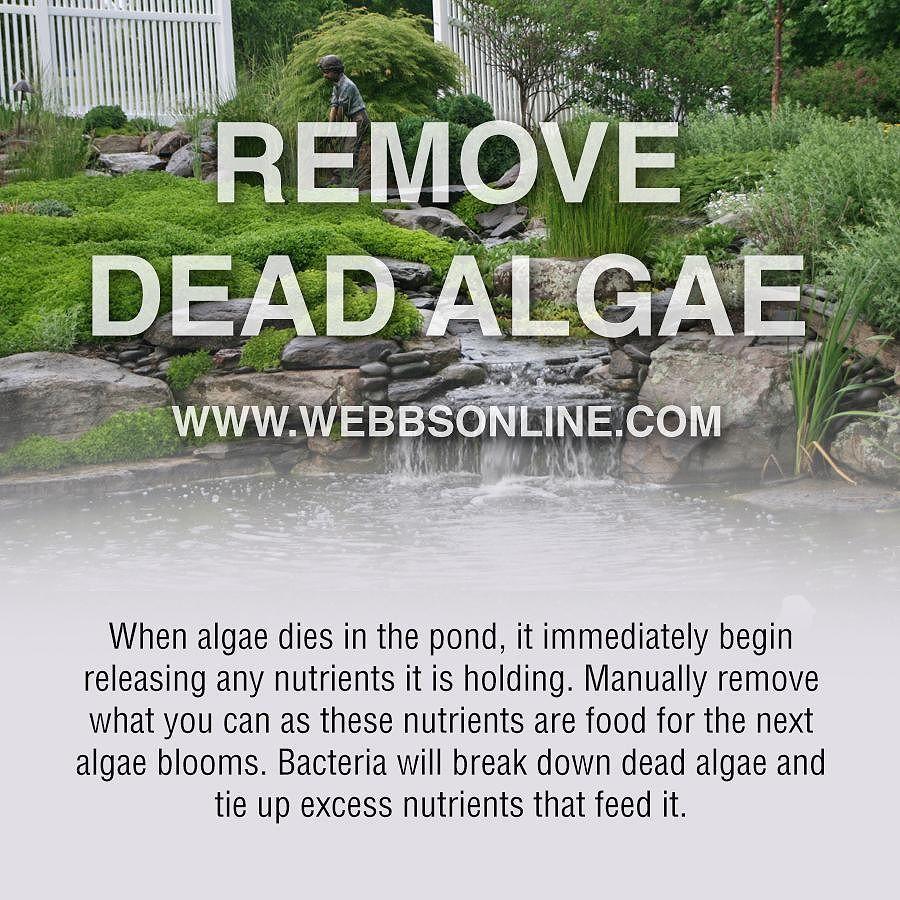 Did you know that living algae eats dead algae? Make sure