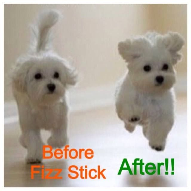 These Adorable Puppy Show The Perfect Example Of The Arbonne Fizz Stick Madness Cute Baby Animals Cute Animals Cute Dogs