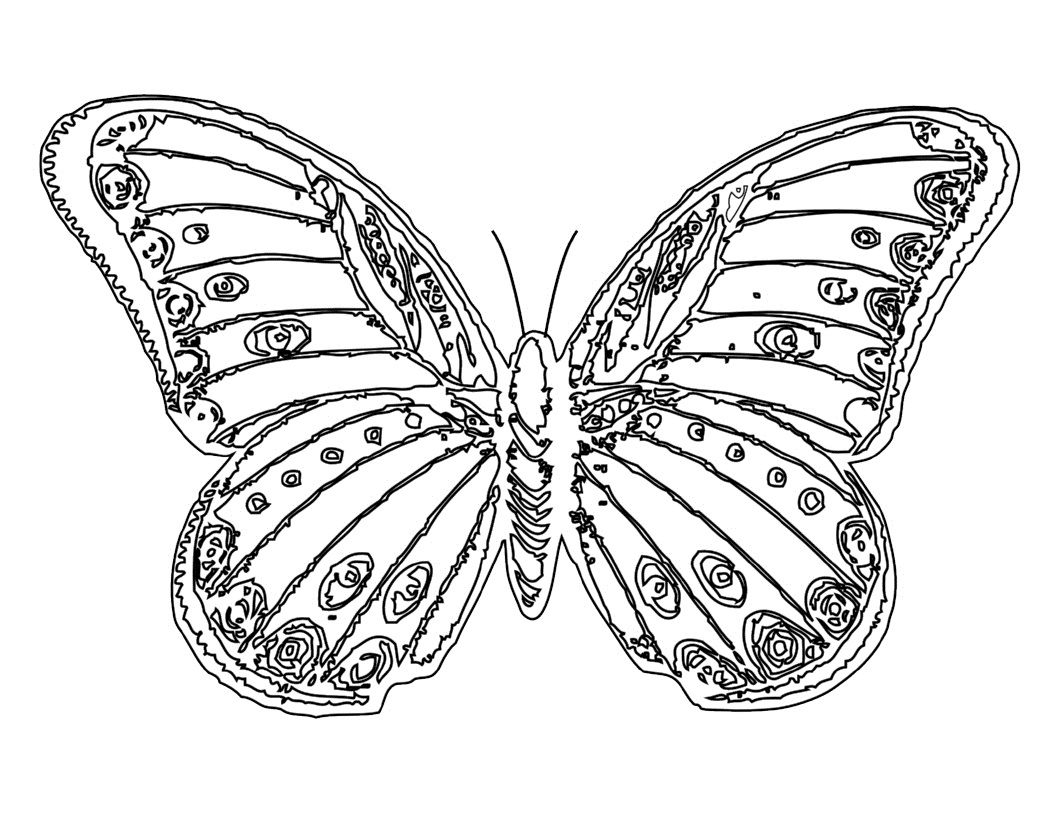Free Printable Butterfly Coloring Pages For Kids In 2020 Butterfly Coloring Page Printable Coloring Pages Coloring Pages For Kids [ 816 x 1056 Pixel ]