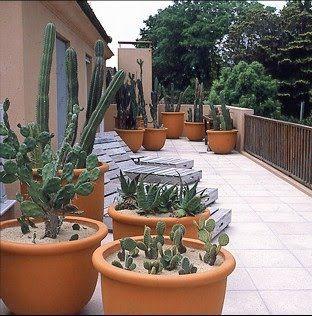 41+ Maceteros para cactus grandes inspirations