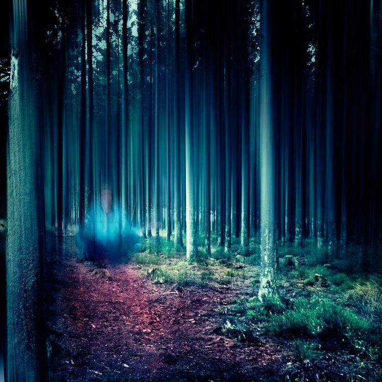 Surreal forest scenery - manipulated photograph by Dirk Wuestenhagen #forest #wood #forete #bois #foresta #bosco - Carefully selected by GORGONIA www.gorgonia.it