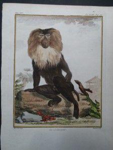 dating monkey paraplegic dating website
