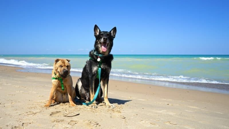 Pet Friendly National Park Indiana Dunes Gopetfriendly In 2020 Dog Friendly Beach Pet Travel Pet Friendly Beach