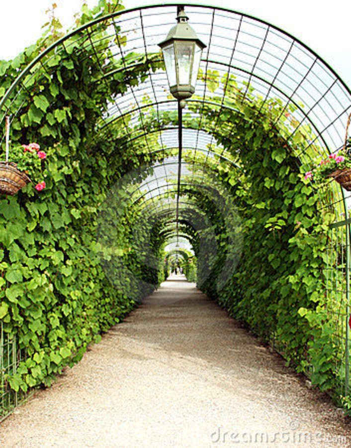 Vine Arbor Tunnel Mmmm Good Idea For Growing Curcubits Pole