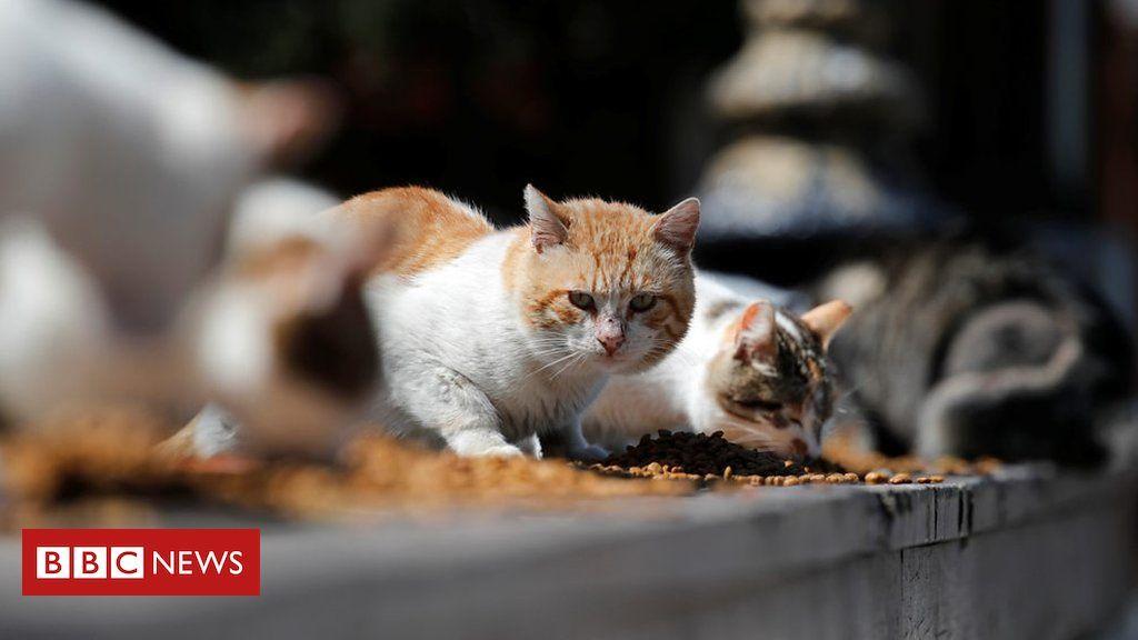 Pets abandoned over coronavirus fears