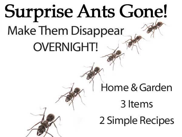 Homemade ant repellent spray and other natural solutions garten garden - Ameisen garten loswerden ...