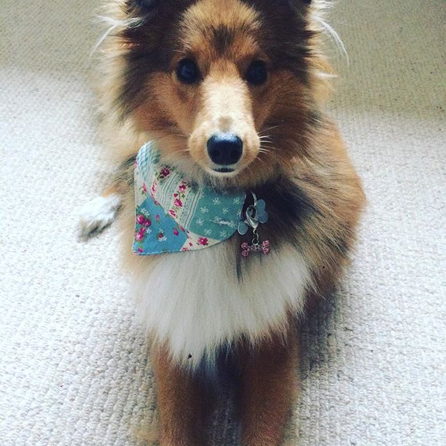 Someone Is Very Pleased With Their New Bandana