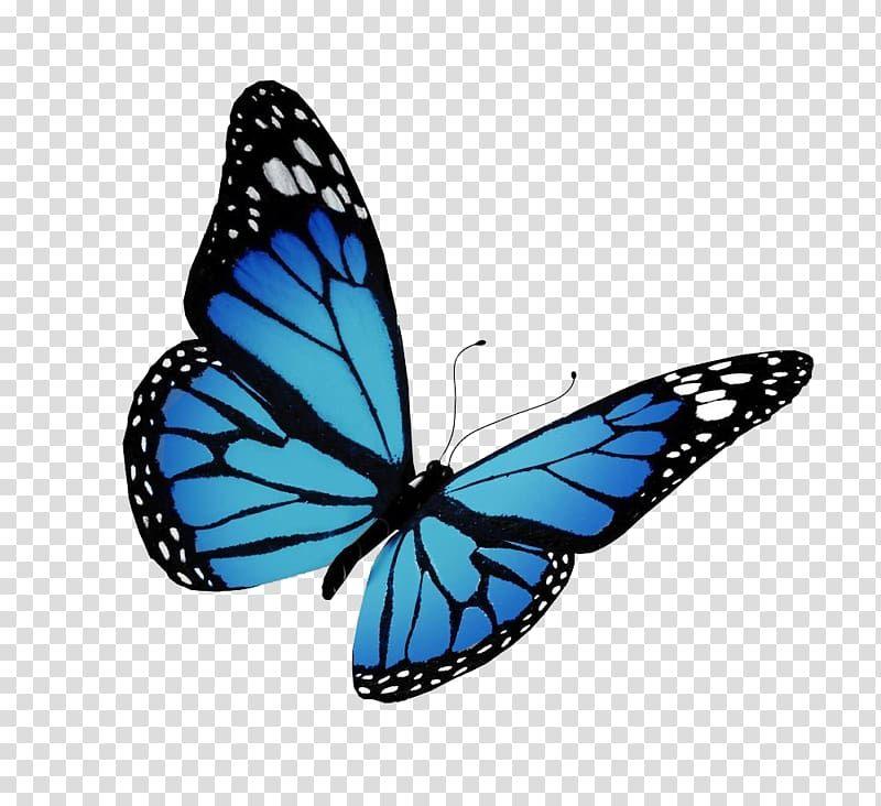 38++ Blue monarch butterfly clipart ideas in 2021