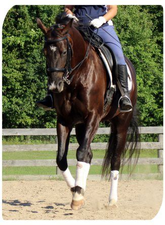14 Ways to Communicate While Riding Your Horse  HorseListening Blog