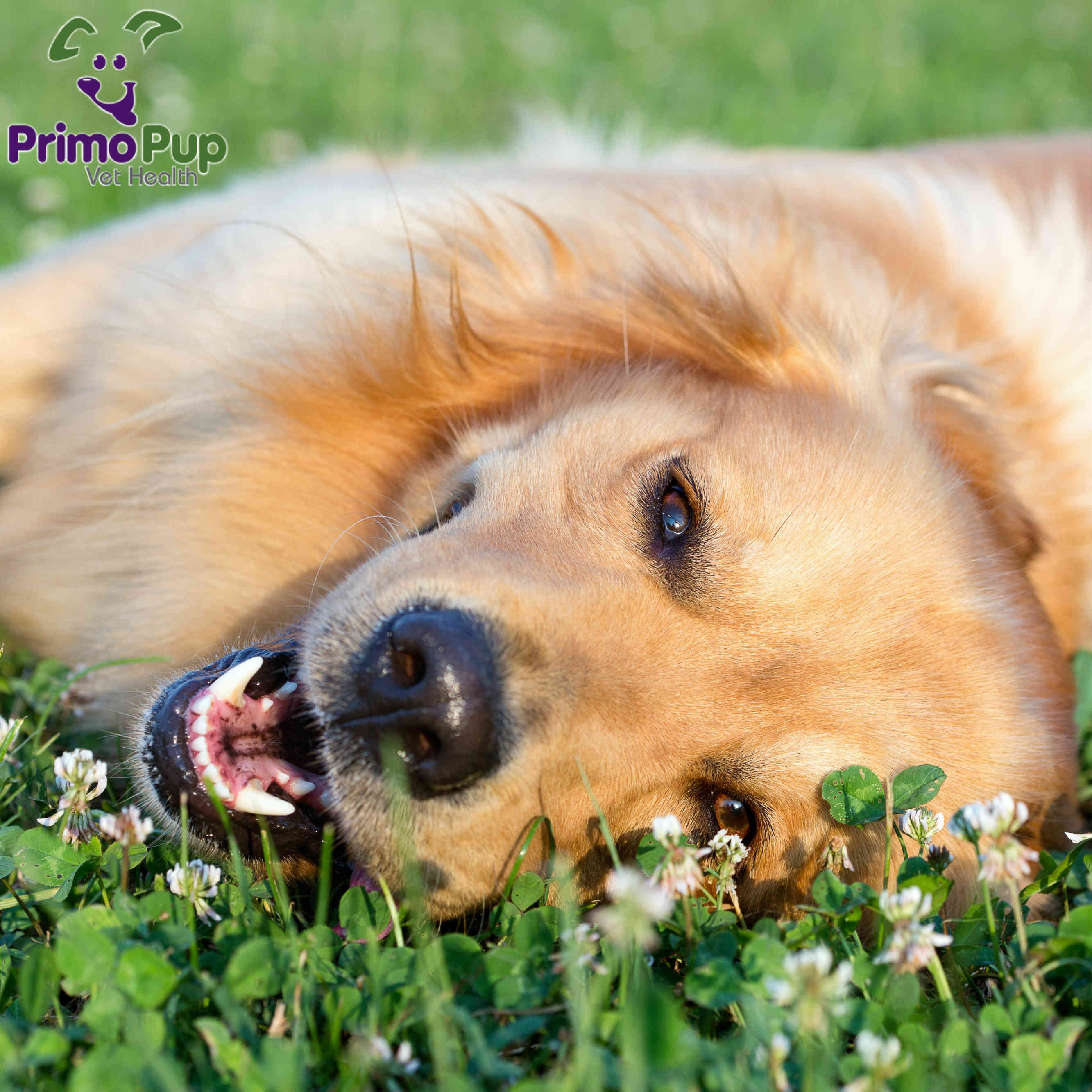 Spring is in the air ) PrimoPup Female dog names, Dog