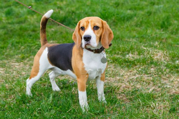 Leash Train Your Puppy In 5 Easy Steps Best Small Dog Breeds
