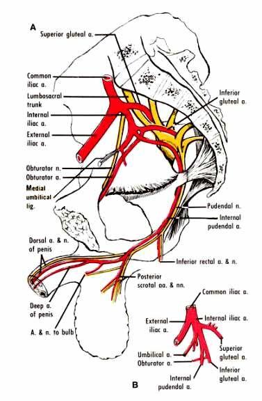 Figure 32 2 Neurologie