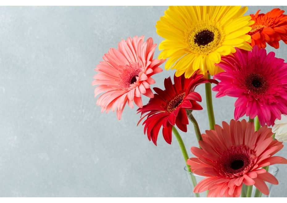 A Beautiful Gerberas Bouquet When Presented To Someone Special Can Immediately Bring A Happy Curve On The Face Know Mo Gerbera Daisy Daisy Flower Flower Guide