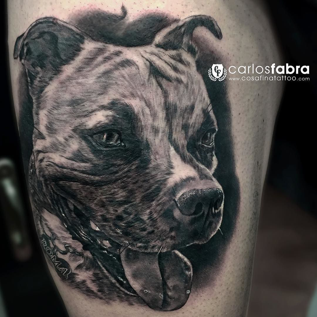 roma precioso staffordshire bull terrier para sergio muchas gracias a ti y a frica tat. Black Bedroom Furniture Sets. Home Design Ideas