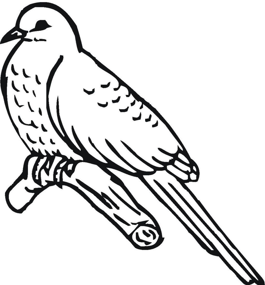 Spring Birds And Flowers Coloring Pages