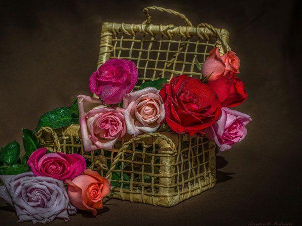 Still-Life-Photography-7
