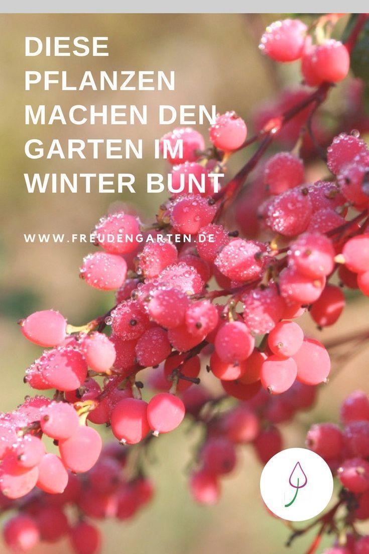 Pflanzen, die im Winter Farbe zeigen