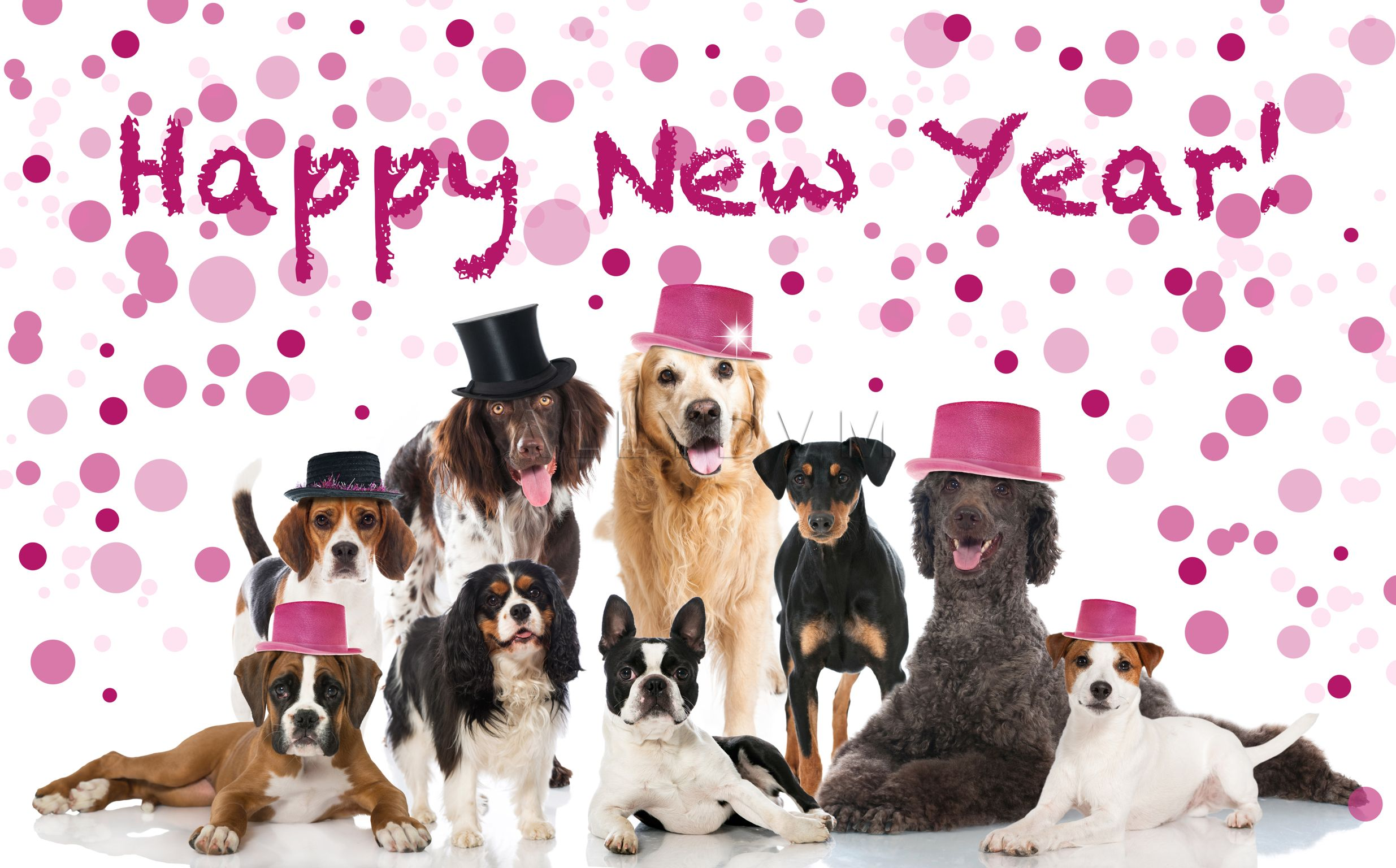 Funny New Years Dog Pictures
