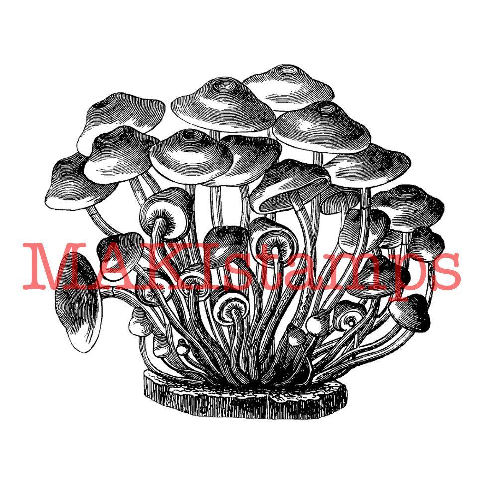 unmounted or cling stamp option 170101 Big mushroom rubber stamp vintage french mushroom chart