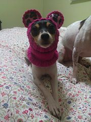 Free knitting pattern for a small dog snood every chihuahua needs free knitting pattern for a small dog snood every chihuahua needs winter gear i dt1010fo